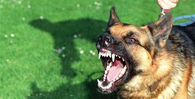 Bị chó cắn nên ăn gì? Kiêng ăn gì khi bị chó cắn?