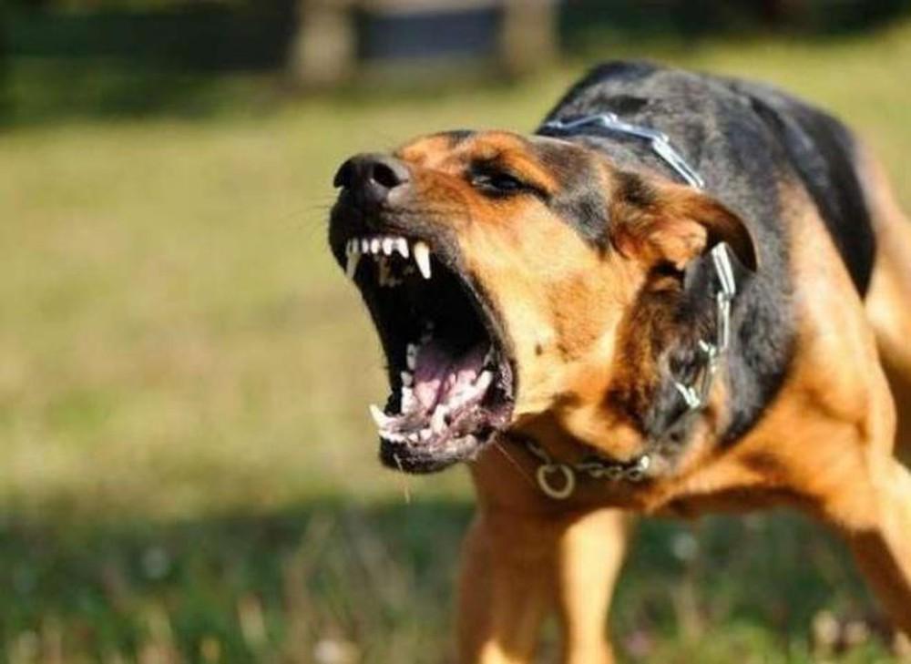 Bị chó cắn cần theo dõi bao nhiêu ngày và lưu ý gì?