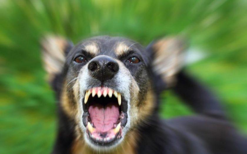 Bị chó cắn cần theo dõi bao nhiêu ngày?