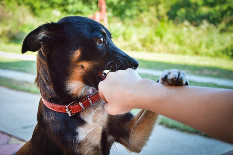Bị chó cắn phải làm sao? Chế độ dinh dưỡng dành cho người bị chó cắn